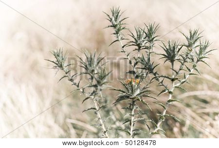 Summer Composition With Dry Bur Flower On Bright Background