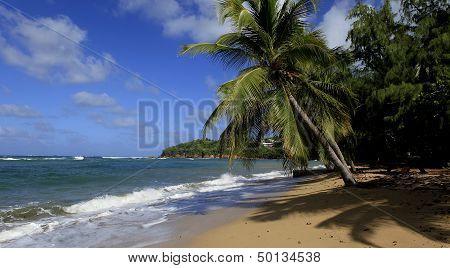 Beach of Tartane, Martinique island