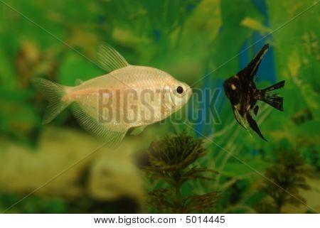 Fishes In The Aquarium.