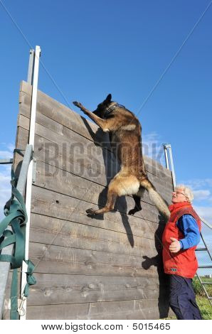 Training Of Police Dog