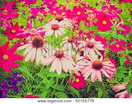 Retro Look Daisy Flower