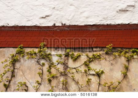 Village Wall With Ivy