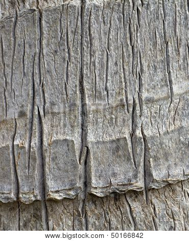 tropical tree bark closeup
