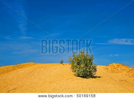 Lonely Shrub On The Sand Hill In Sunny Day
