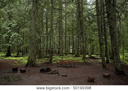 Mossy Forest Campground