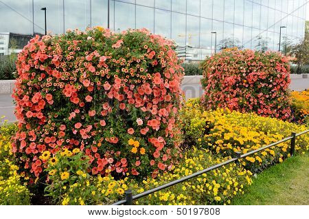 Vertical Flowerbed Against The Building Of Glass