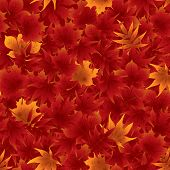 Seamless red maple leaves pattern