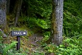 stock photo of fern  - Trail Way Sign - Wood Trail Sign Somewhere in Olympic National Park Washington USA. Hiking Theme. Lifestyle Photography Collection