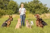 stock photo of pomeranian  - A group of dogs listen to the commands of the dog trainer - JPG
