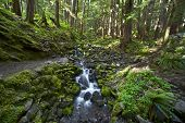 picture of olympic mountains  - Olympic Forest and Mountain Stream - JPG