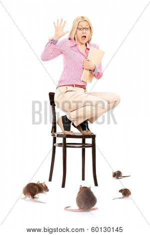 Scared woman standing on chair during a rat invasion, isolated on white background