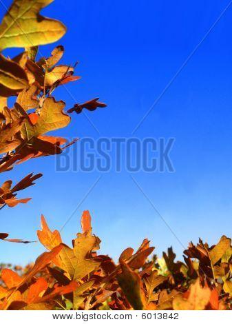 Frontera de hoja de otoño