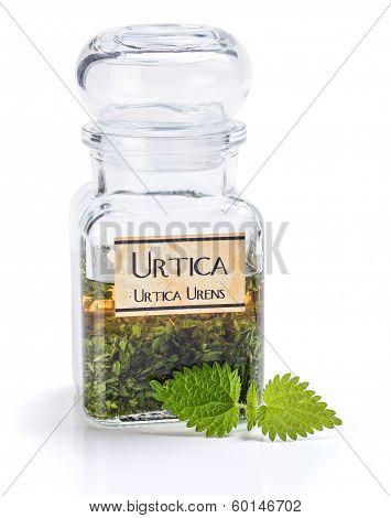Urtica Urens Plant Extract
