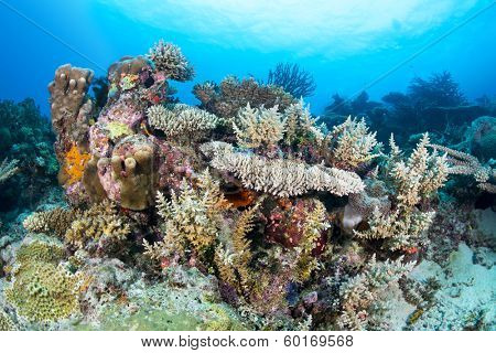 A healthy tropical coral reef hosting tabletop and staghon corals and encrusting, colorful sponges with clear blue water.