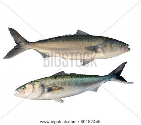 pair of Caraway fish isolated on white