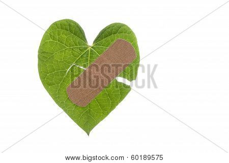 Heart Shaped Leaf Broken With Bandaid