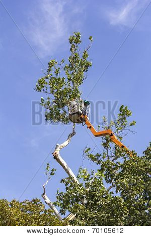 Trimming Trees With A Chainsaw