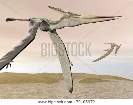 Pteranodon flying - 3D render