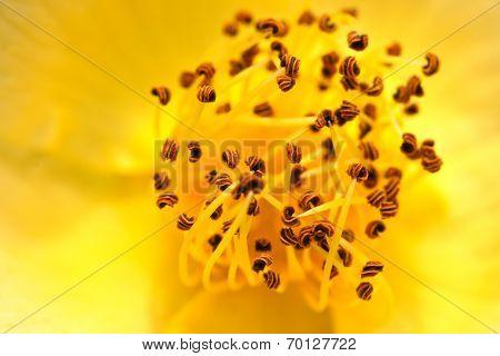Carpel Flower