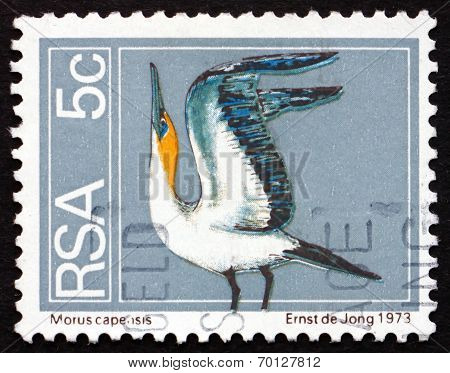 Postage Stamp South Africa 1974 Cape Gannet, Seabird