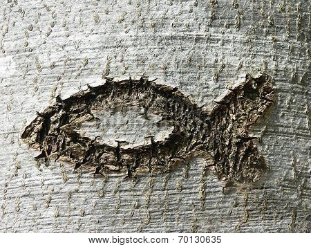 Christian Symbol Ichthys Fish, Scratched In A Tree Bark