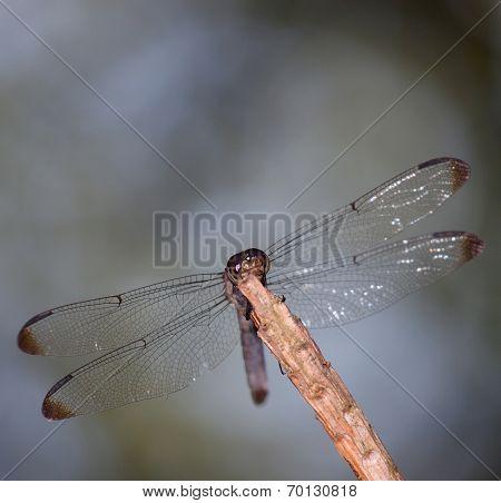 Bug Predator