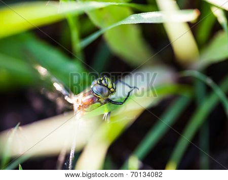 Dragonfly Sitting On The Green Grass