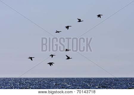 Birds in silhouettes above the sea.