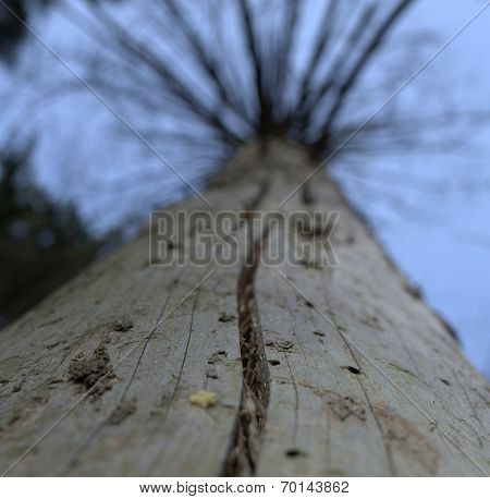 Tree Withered