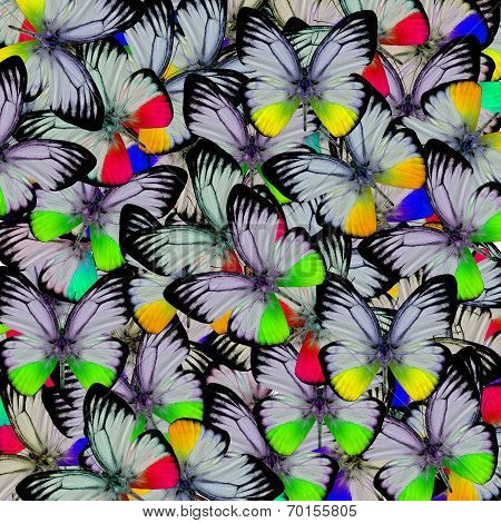 Exotic Of Multicolor Butterflies Consolidated Into The Great Backgroun Patterns