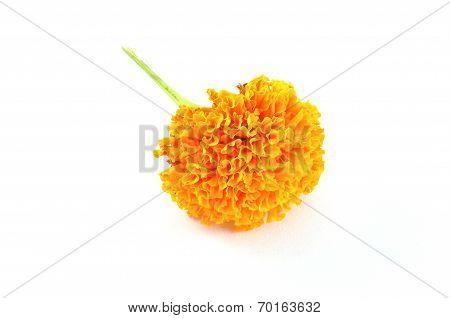 Orange Marigold (tagetes) Flower Isolated On White Background