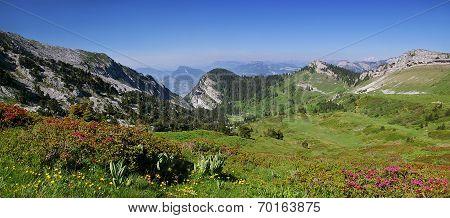 Alpine Foothills: Chartreuse Mountain Range, Flowering Azaleas