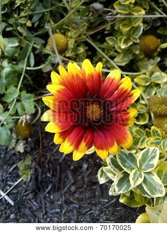 Bright red and yellow flower
