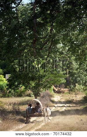 Ox Cart To The Village Near Mingun Pagoda,myanmar.