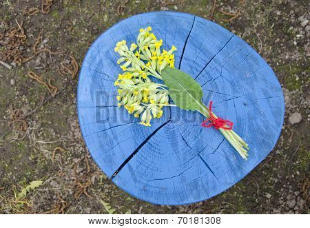 Medical Spring Herb Cowslip Primula Veris Bunch On Wooden Trunk