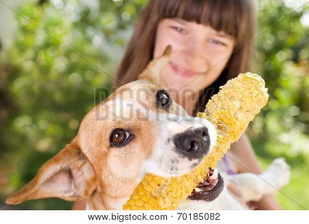 Dog With Corn In Mouth