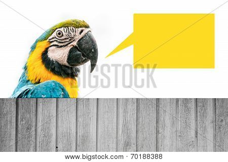 Macaw Parrot Wit Ha Speech Bubble
