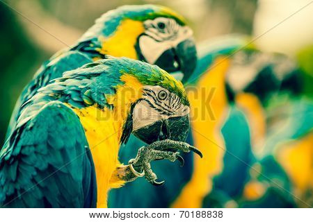 Macaw Parrots Sitting On A Row