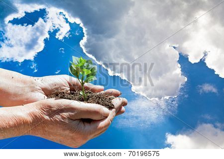 Handful Of Soil With Green Sprout In Hands And Sky