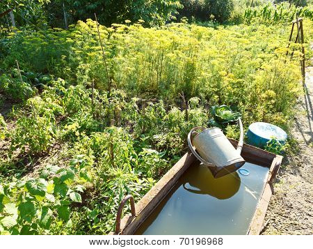 Basin With Water For Garden Watering