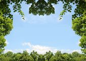 stock photo of linden-tree  - natural frame of green leaves and trees blue sky with clouds - JPG