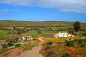 stock photo of semi-arid  - Namakwaland farm with flowers in south africa - JPG