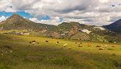 stock photo of pueblo  - Pueblos Blancos near Casares - JPG