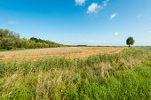image of roughage  - Landscape with golden yellow wheat partially harvested - JPG