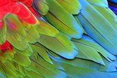 stock photo of green-winged macaw  - Close up of Green - JPG