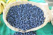 picture of berries  - Harvest of fresh acai berries - JPG