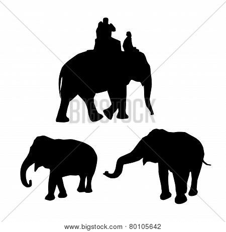 Elephants Black Silhouette On White Background. Vector