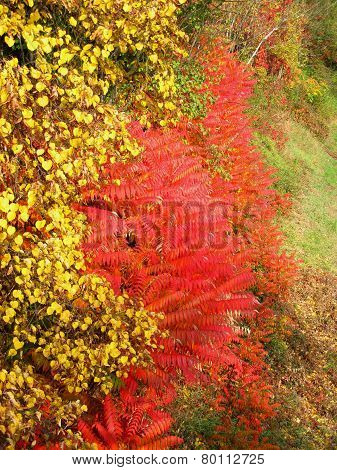 yellow and red bushes