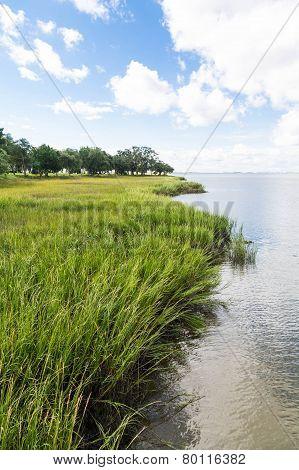 Green Marsh Grass Under Blue Sky