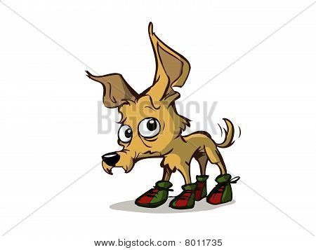 cute dog with shoes